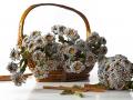 Drobné kvetinky  biele v košíku